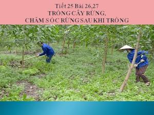 Bài giảng Công nghệ Lớp 7 - Tiết 25: Trồng cây rừng, chăm sóc rừng sau khi trồng